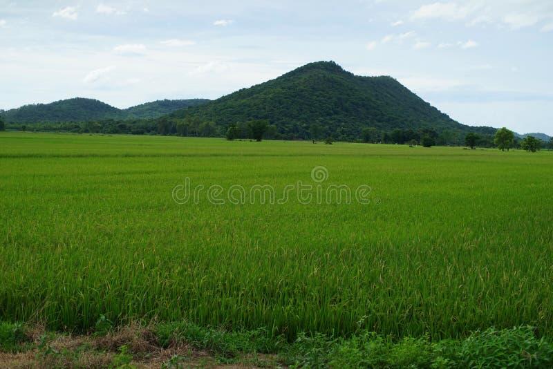 Giacimento verde del riso in Tailandia del Nord fotografie stock libere da diritti
