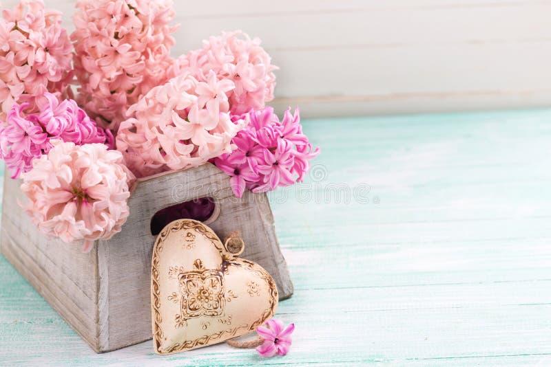Giacinti rosa freschi in scatola e nel cuore decorativo su turchese w fotografia stock