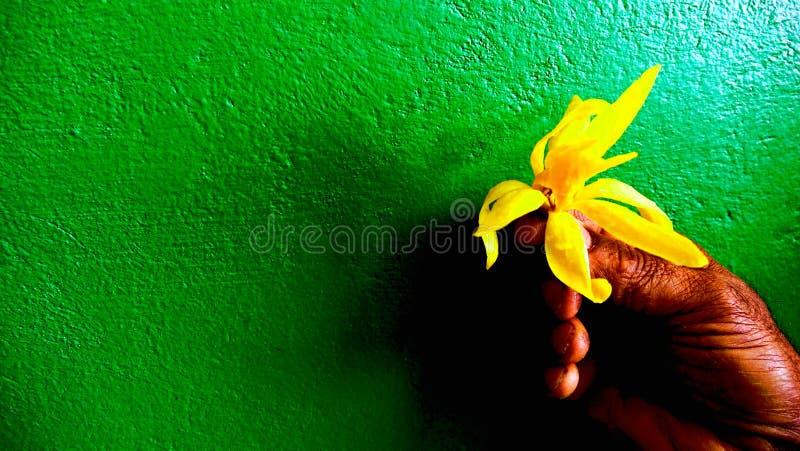 Giallo-cupo sulla carta da parati verde-cupo fotografia stock
