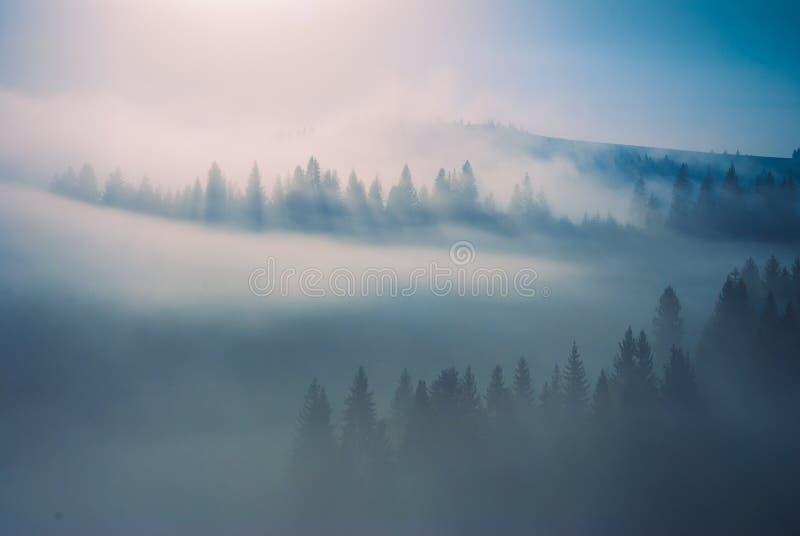 Giallo magico fog_1 immagine stock libera da diritti
