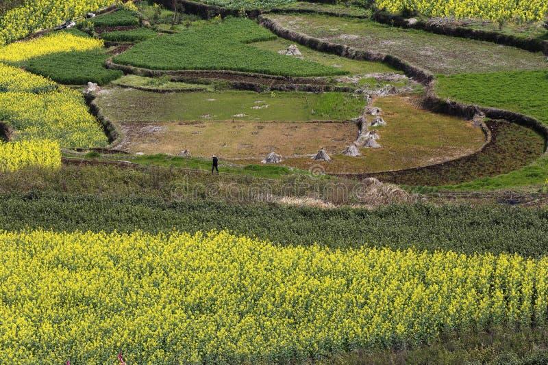 giallo, verde e terra, la composizione dell'immagine fotografie stock