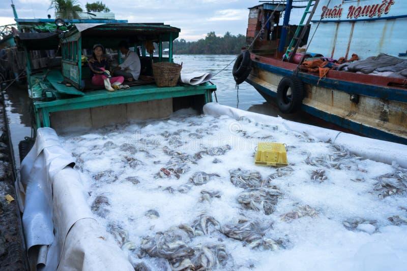 An Giang, Vietnam - 6 décembre 2016 : Preserverd attrapé de poissons par la glace en port de pêche de Tac Cau à l'aube, je provin photos libres de droits