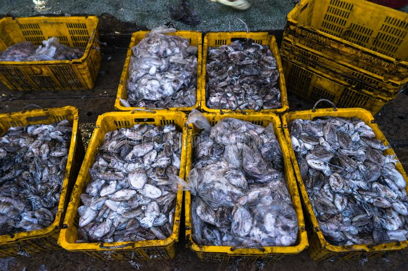 An Giang, Vietnam - Dec 6, 2016: Caught fishes in Tac Cau fishing port at dawn, Me Kong delta province of Kien Giang, south of Vie stock photography