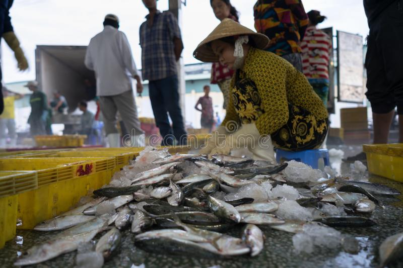 An Giang, Vietnam - Dec 6, 2016: Caught fishes with workers working at Tac Cau fishing port at dawn, Me Kong delta province of Kie royalty free stock photos