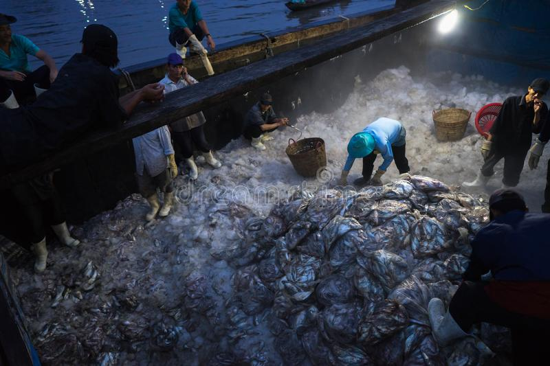 An Giang, Vietnam - Dec 6, 2016: Caught fishes and working activities in Tac Cau fishing port at dawn, Me Kong delta province of K stock photos