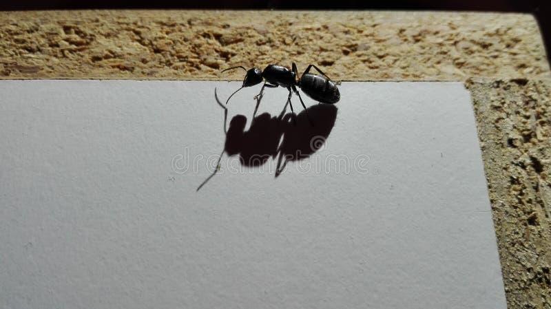 Giant ant stock image