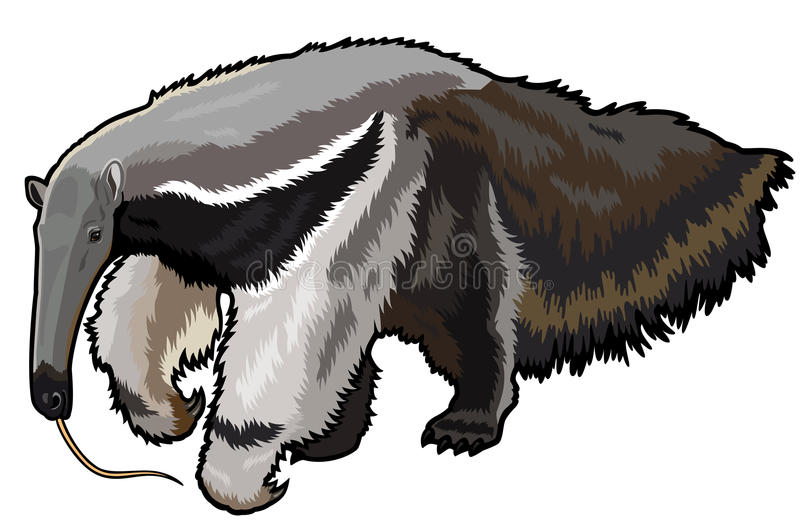 Giant anteater stock illustration