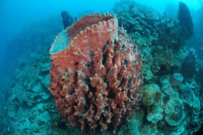 Download Giant barrel sponge stock photo. Image of details, closeup - 22999912