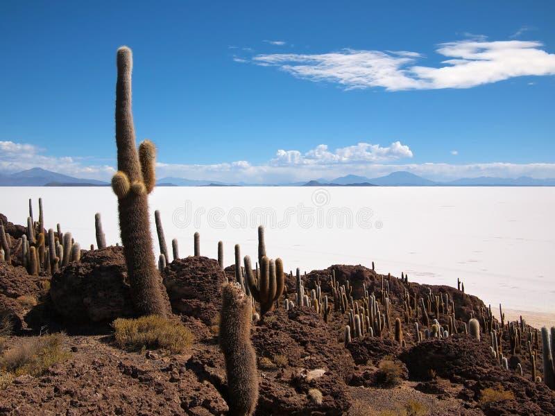 Giant cactus and Uyuni salt lake stock photography