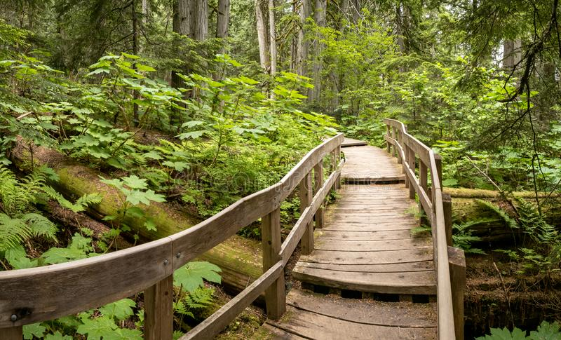 Giant Cedars Boardwalk in the Columbia Mountains – an old-growth rain forest, in Mount Revelstoke National Park of Canada royalty free stock photography