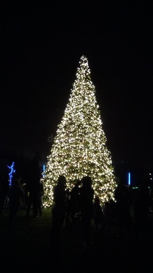 Giant Christmas tree stock photography