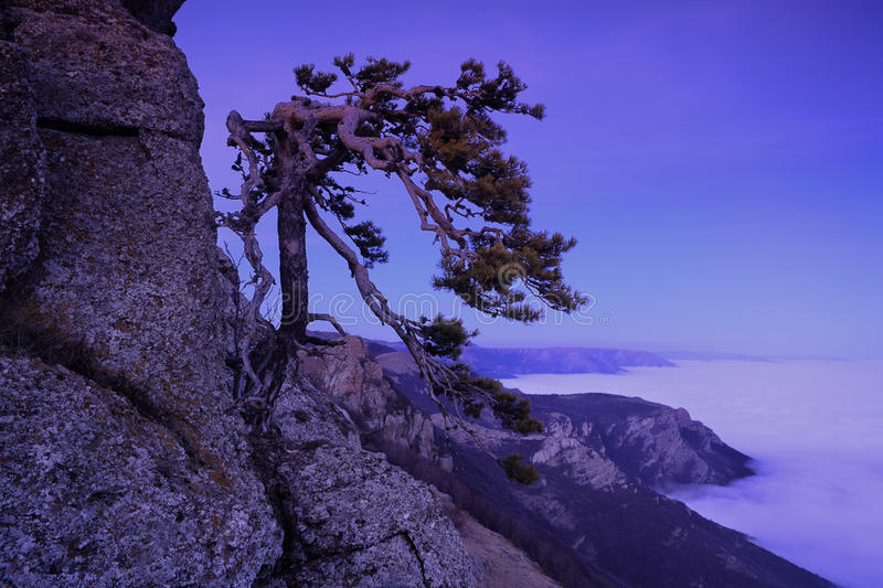 Giant ear. Mountain pine in the background is Demerdji in the Crimea royalty free stock photography
