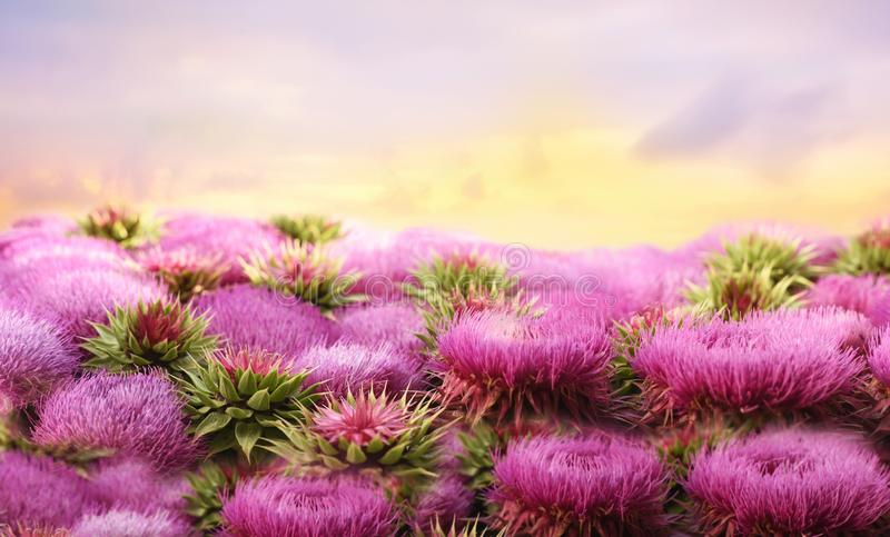 Giant fluffy lilac flowers and the sky. Surrealism, a fantastic picture royalty free stock photography