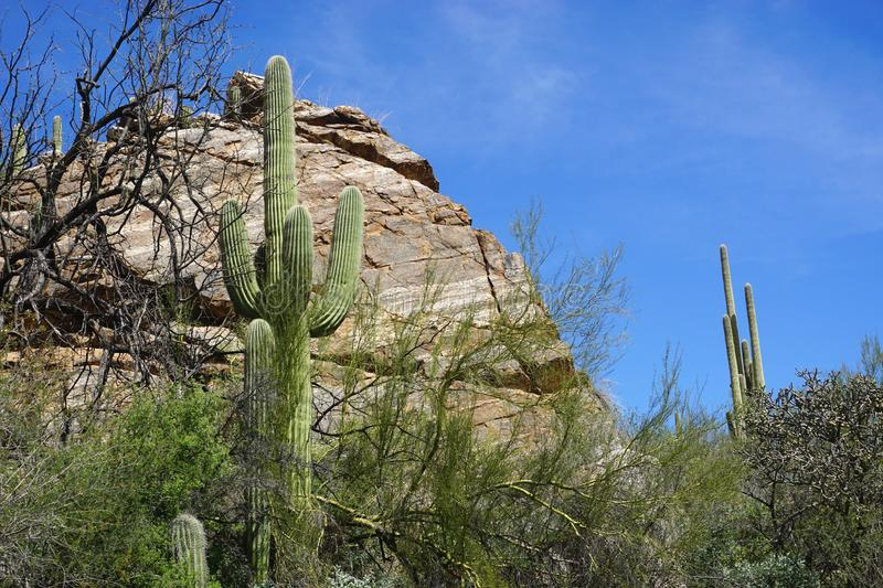 Scenic desert landscape with giant boulder and tall Saguaro cactus royalty free stock image