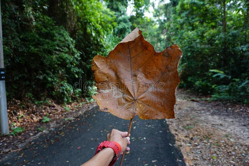Giant Leave stock images
