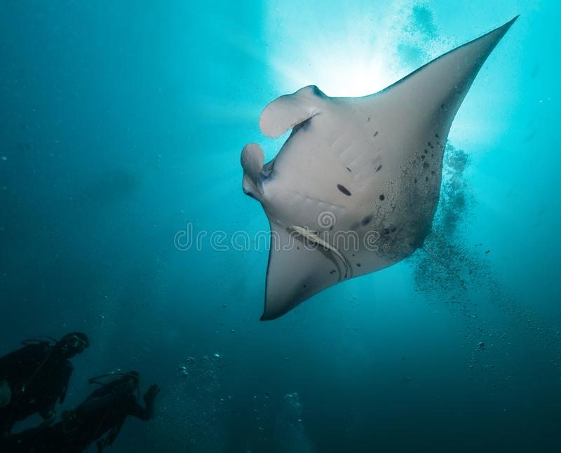Giant manta ray with two divers silhouettes stock photos