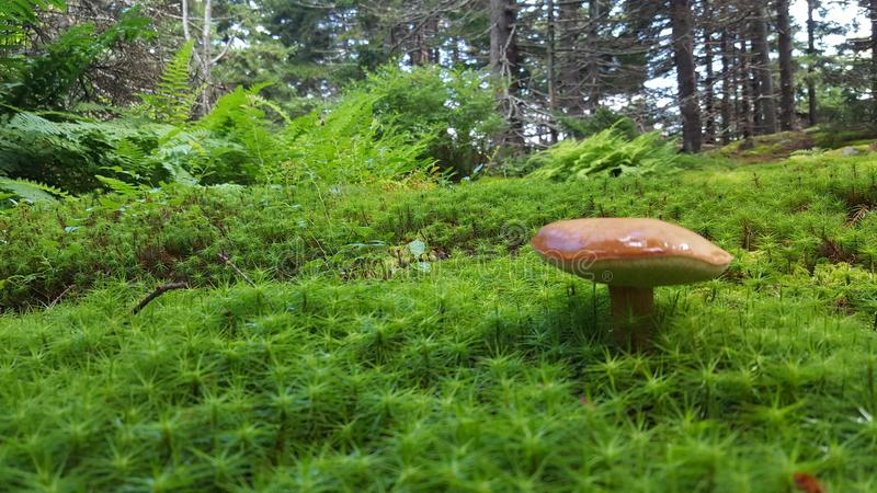 Giant mushroom royalty free stock photos