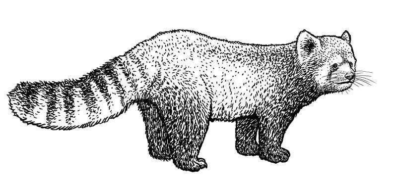 Giant Panda illustration, drawing, engraving, ink, line art, vectorRed panda illustration, drawing, engraving, ink, line art, vect stock illustration