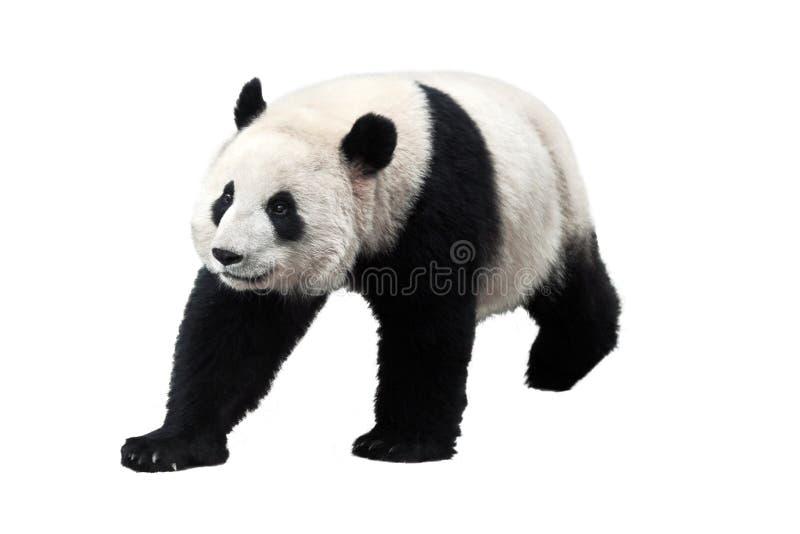panda kostenlos