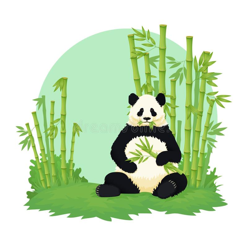 Giant panda sitting and eating with bamboo forest in the background. Black and white bear holding and chewing bamboo. Giant panda sitting and eating with bamboo stock illustration