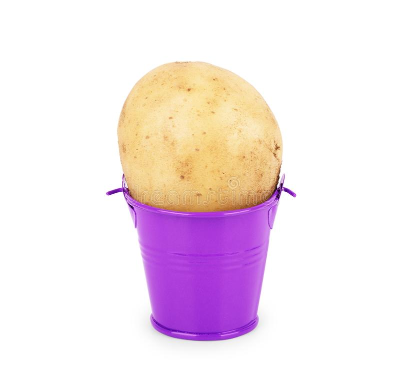 Giant potato in a bucket on a white background.  royalty free stock photos