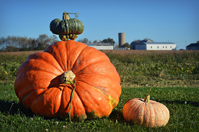 Giant Pumpkin. A giant pumpkin and two smaller squash displayed in front of a white farm and farm field in Wisconsin royalty free stock photo