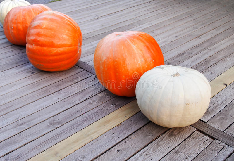 Giant Pumpkins royalty free stock photography