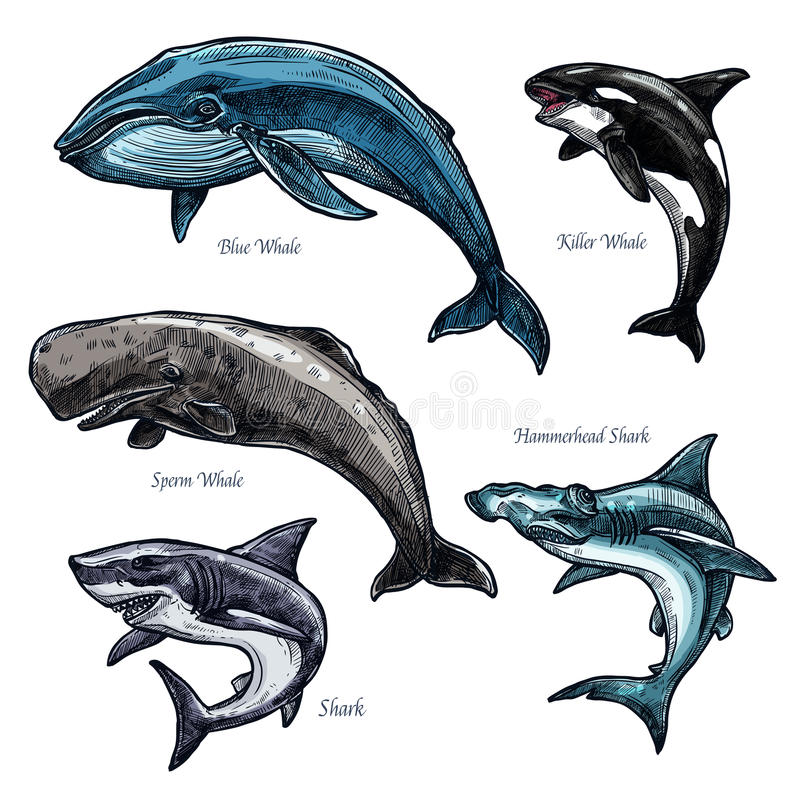 Giant sea animals whale and shark vector icons set stock illustration