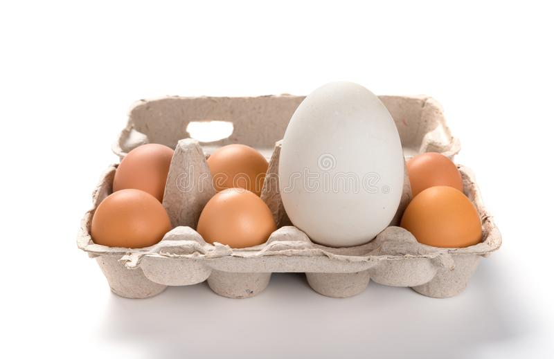 Giant size goose egg between small chicken eggs in a package. Concept of size comparison stock photography