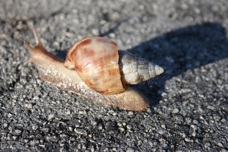 Giant snail! stock image
