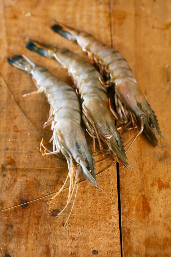 Giant tiger raw shrimps prawns royalty free stock photos