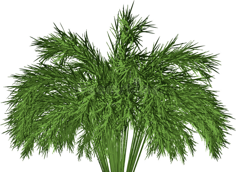 Giant Timber Bamboo:. A Giant Timber Bamboo: Phyllostachys stock illustration