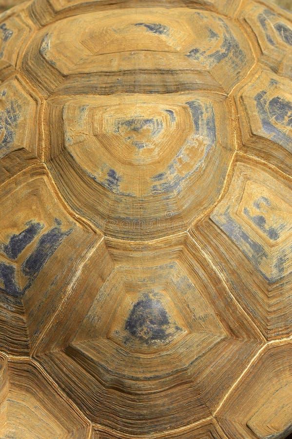 Giant tortoise shell royalty free stock photos