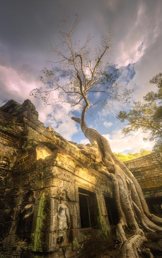 Download Giant Tree Of Ta Prohm Temple In Angkor Cambodia Stock Image - Image of giant, ruin: 111537963