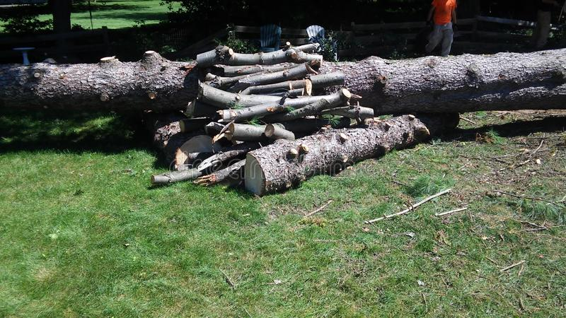 Giant tree trunk and logs. A large pile of logs and a giant tree trunk royalty free stock images