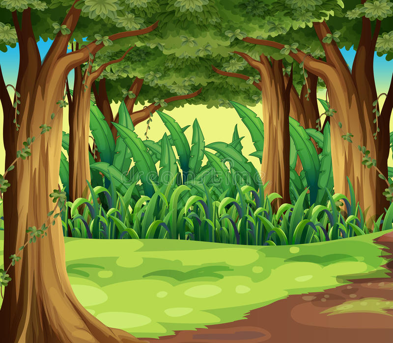 Giant trees in the forest stock illustration