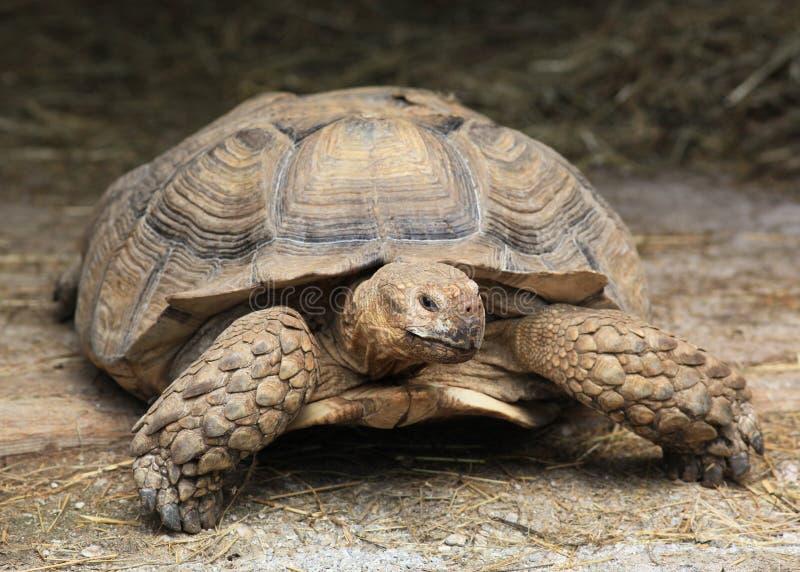 Giant turtle stock photos