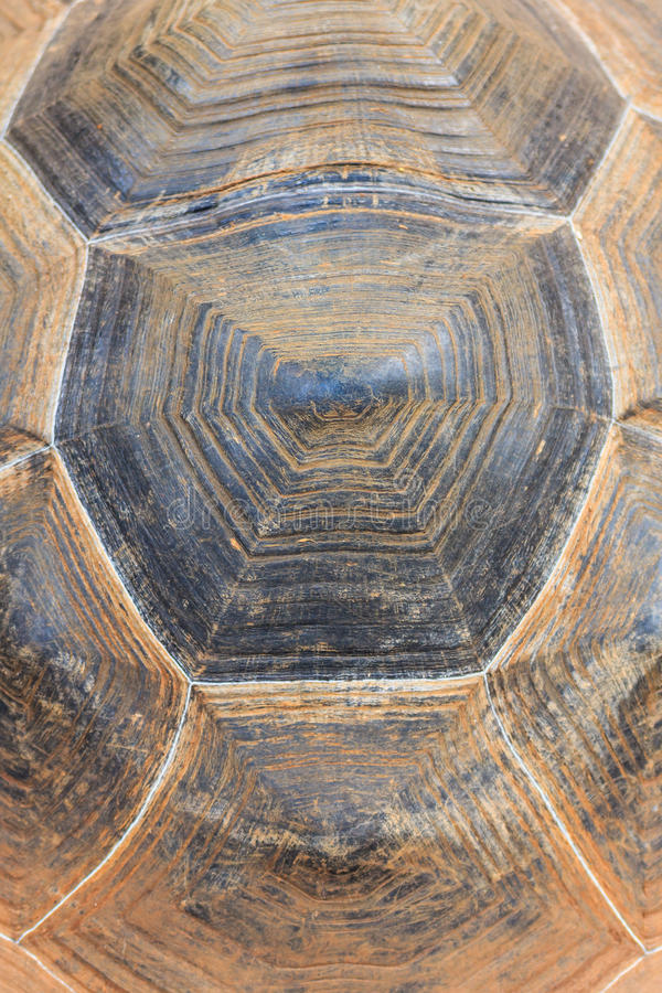 Giant turtle shell texture background. Close up giant turtle shell texture background royalty free stock photography