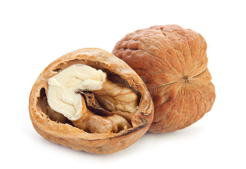 Download Giant walnut stock photo. Image of seed, open, snack - 26970390