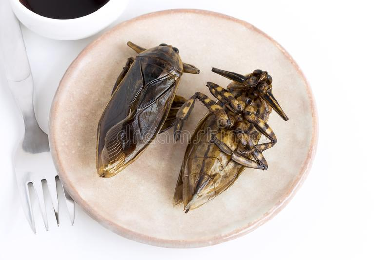 Giant Water Bug is edible insect for eating as food Insects cooking deep-fried crispy snack on plate and fork with sauce on white stock photography