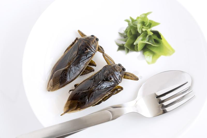 Giant Water Bug is edible insect for eating as food Insects cooking deep-fried crispy snack on white plate, spoon and fork with royalty free stock images