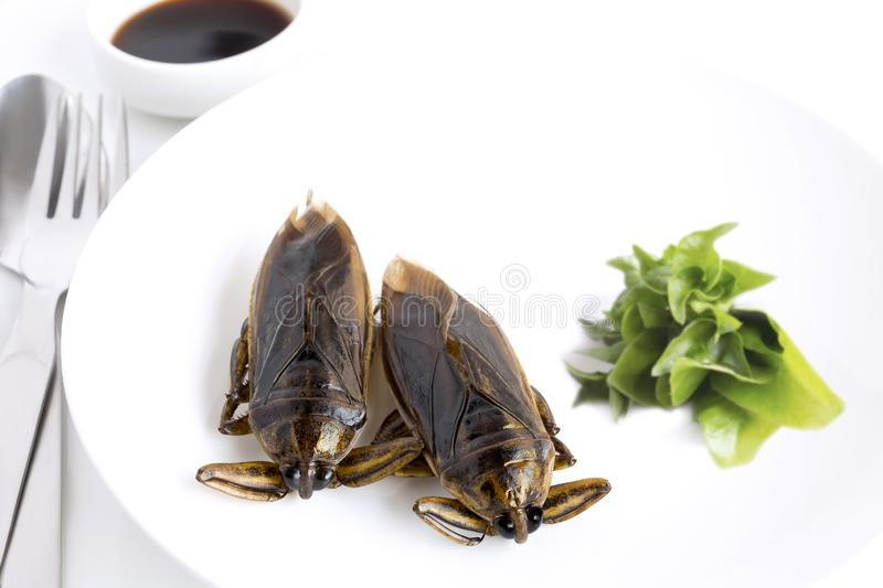 Giant Water Bug is edible insect for eating as food Insects cooking deep-fried crispy snack on white plate, spoon and fork with stock image