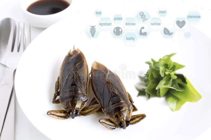 Giant Water Bug is edible insect for eating as food Insects cooking deep-fried snack and media symbol icons nutrition on white royalty free stock photo