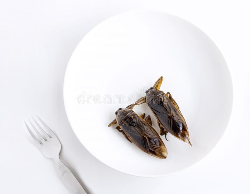 Giant Water Bug is edible insect for eating as food Insects cooking deep-fried snack on white plate with fork on gray background,. It is good source of protein royalty free stock photos