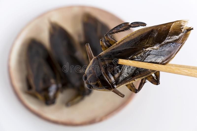 Giant Water Bug is edible insect for eating as food Insects deep-fried crispy snack on plate and chopsticks on white background, royalty free stock photography