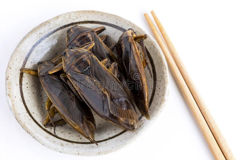 Giant Water Bug is edible insect for eating as food Insects deep-fried crispy snack on plate and chopsticks on white background, stock image