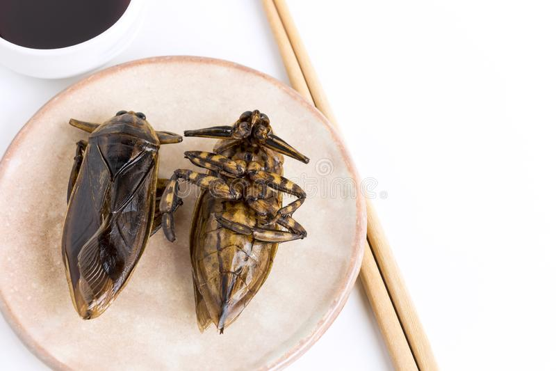 Giant Water Bug is edible insect for eating as food Insects deep-fried crispy snack on plate and sauce with chopsticks on white royalty free stock image