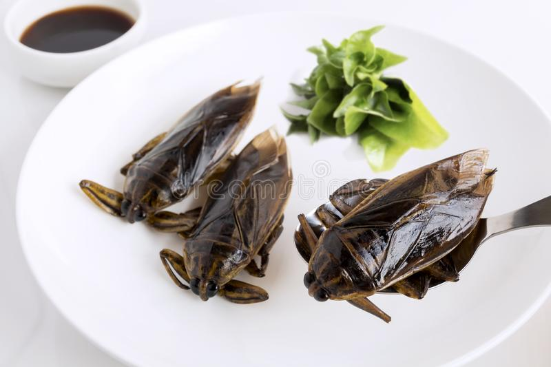 Giant Water Bug is edible insect for eating as food Insects deep-fried crispy snack on white plate and spoon with vegetable, it is stock image