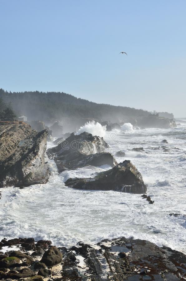 Giant Waves At Shore Acres State Park, Oregon royalty free stock image