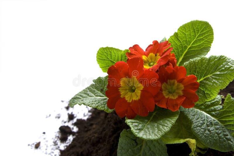 Giardinaggio di primavera fotografie stock libere da diritti